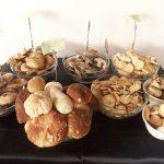 Cogumelos Silvestres